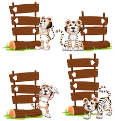 White tiger with wooden signs vector image