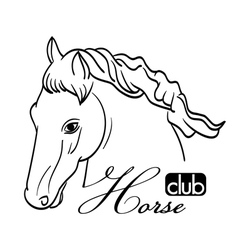 Hand drawn horse head vector