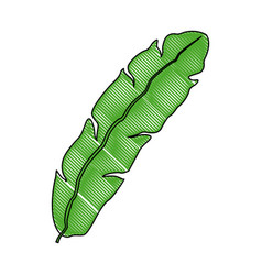 Banana leave decorative tropical foliage icon vector