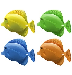 Four different colors of fish vector