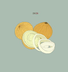 Onion hand drawn set full rings and half cutout vector