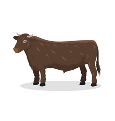 Bull farm animal male standing vector