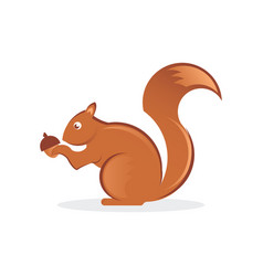 squirrel with nut vector image vector image
