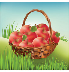 Basket with apples on the lawn harvest apples vector