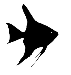 Scalare fish vector image vector image