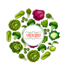 Vegetable round symbol with cabbage veggies vector
