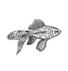 Zentangle stylized goldfish vector image