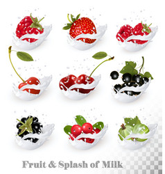 Big collection of fruit and berries in a milk vector image