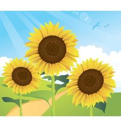 Sunflower landscape vector