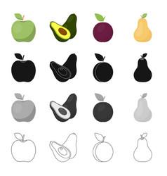 Green apple ripe avocado plum fruit pear vector