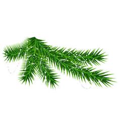 Green pine fir branch and rare snow snowflake vector