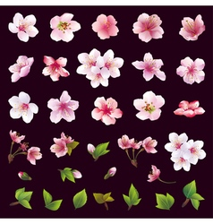Set of flower of cherry tree and leaf vector