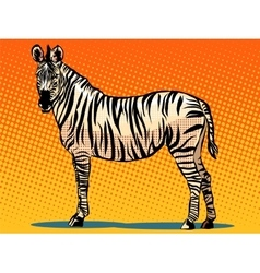 African zebra animal vector