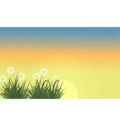 Landscape of flower at spring with orange sky vector image