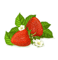 Strawberries with leaves vector