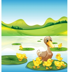 A duck and her ducklings at the pond vector image vector image