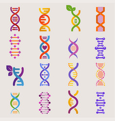 Dna genetic sign with genome or gene in vector