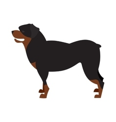 Dog breed rottweiler vector image