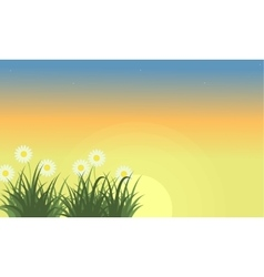 Landscape of flower at spring with orange sky vector image