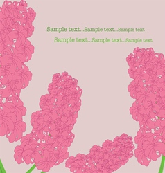 Pink hyacinth vector image