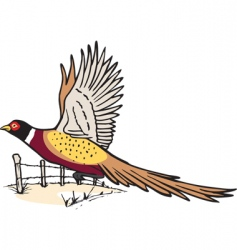 pheasant in flight vector image