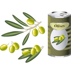 Green olive branch and bank of green olives vector