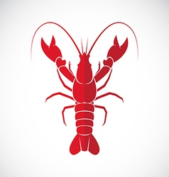 image of an lobster design vector image