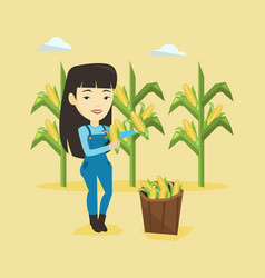 farmer collecting corn vector image