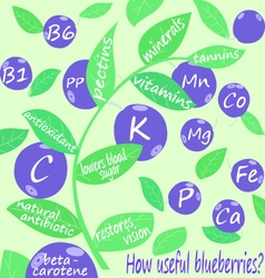 How useful blueberries vector