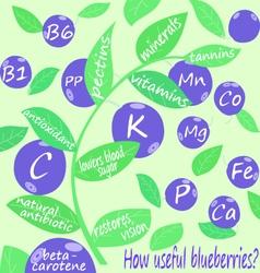 How useful blueberries vector