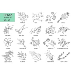 Hand drawn set of herbs and spices vintage vector