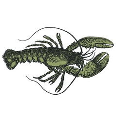Lobster vector