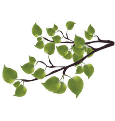 Branch of a tree with green leaves vector