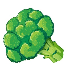 A broccoli vector