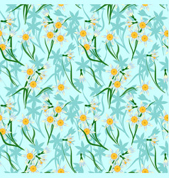 blooming daffodils vector image vector image