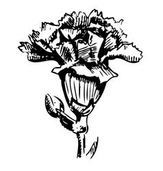 Garden carnation sketch vector