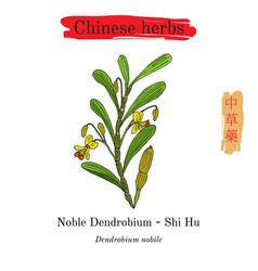 Medicinal herbs of china noble dendrobium vector