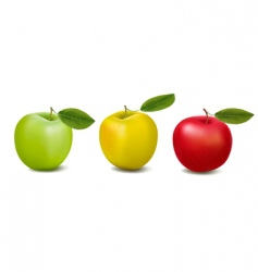three color apples vector image