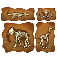 Four different fossils underground vector