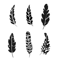 feather set black silhouette feather vector image vector image