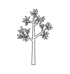 Outline tree with leaves and trunk vector