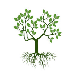 color tree with leafs and roots vector image vector image
