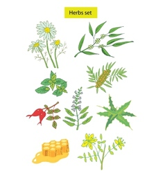 Herbs set detailed vector
