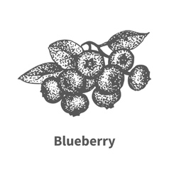 Sketch blueberry with leaves and branches vector
