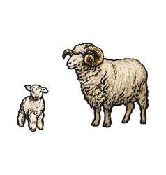 Sketch cartoon style sheep and lamb set vector