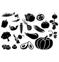 Set of different fresh vegetables vector image