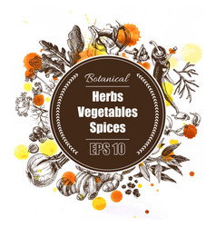 background - spices herbs vegetables vector image vector image