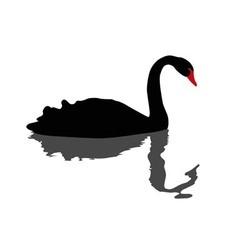 Black swan swimming vector