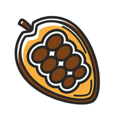 delicious natural mexican ripe cocoa bean isolated vector image