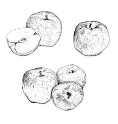 Ink apple sketches set vector image